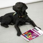 Parrainage d'un chien guide d'aveugle #DirectEnsemble